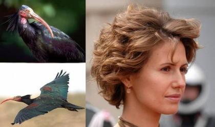 """صورة أسماء الأسد منشغلة بخطر انقراض طائر """"أبومنجل"""" !"""