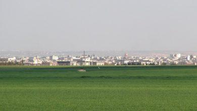 صورة الفاو .. الأمن الغذائي في سوريا مأساوي رغم ازدياد إنتاج القمح