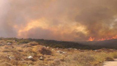 صورة الخوذ البيضاء تبدي استعدادها لإطفاء حرائق الغابات في حماة واللاذقية