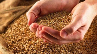 صورة لافروف روسيا زودت نظام الأسد بـ 100 ألف طن من القمح