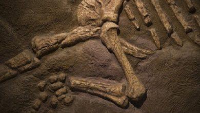 صورة إندونيسيا.. العثور على هيكل عظمي لمخلوق بشري يعود إلى 7200 سنة
