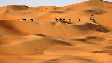 صورة علماء آثار: شبه الجزيرة العربية كانت مساحات خضراء قبل 400 ألف سنة