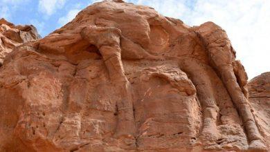 """صورة دراسة: منحوتات جِمال صخرية في السعودية قد تكون """"أقدم"""" من أهرامات الجيزة"""