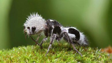صورة منها ما يستيطع تجديد أعضاءه.. 10 حيوانات غريبة تثير دهشة العلماء