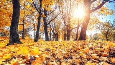 صورة دراسة.. ألوان الخريف قد تكون ضحيّة جديدة للاحتباس الحراري