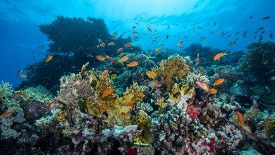"""صورة نيويورك تايمز تسلط الضوء على """"العجائب التي تعيش في قاع البحر"""""""