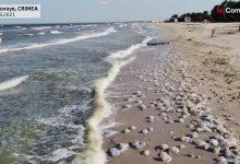 صورة التغيرات المناخية تدفع بقناديل البحر لغزو الشوطئ