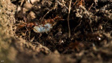 صورة هكذا يستغل النمل علم الفيزياء لحفر الأنفاق
